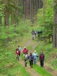 11. Příjemná cesta lesem