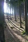12. Stíny lesa