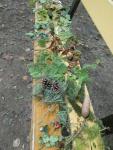 1. Poznáváme listy a plody