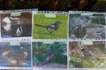 4. Poznáváme ptáky