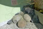 12. Dělové koule z r. 1399 z dobývání hradu Skála